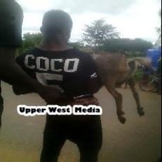 man steals goat