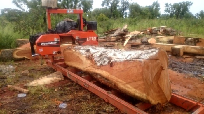 Cash From Trees In Northern Ghana Article Upperwestmedia Net